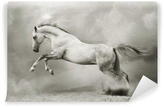 Afwasbaar Fotobehang Zilver-witte hengst op zwart