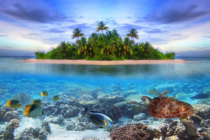 Aluminium Print (Dibond) Marine life at tropical island of Maldives -