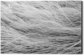 Alüminyum Baskı (Dibond) Siyah ve beyaz fotoğraf, uzun çim saha doku backgrou yukariya