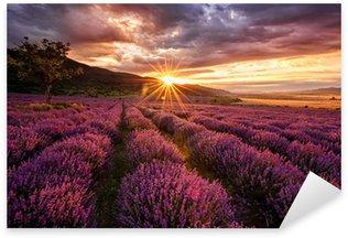 Pixerstick Aufkleber Atemberaubende Landschaft mit Lavendelfeld bei Sonnenaufgang