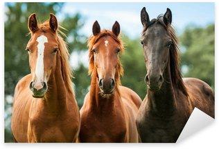 Pixerstick Aufkleber Gruppe von drei jungen Pferden auf der Weide