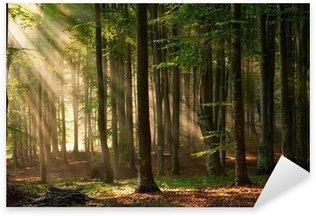 Pixerstick Aufkleber Herbstwaldbäumen. Natur grünem Holz Sonnenlicht Hintergründe.
