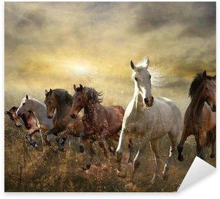 Pixerstick Aufkleber Herde von Pferden im Galopp kostenlos bei Sonnenuntergang
