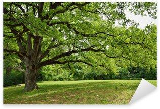 Pixerstick Aufkleber Oak Tree in Park