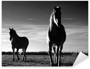 Pixerstick Aufkleber Pferde camargais