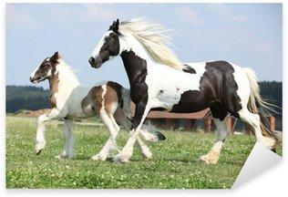 Pixerstick Aufkleber Portrait der schönen arabischen Pferd