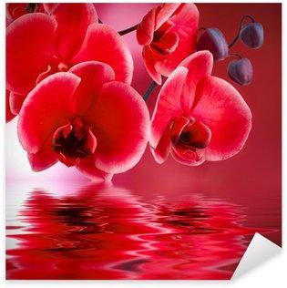 Pixerstick Aufkleber Red Orchideen mit Hintergrund und Wasser