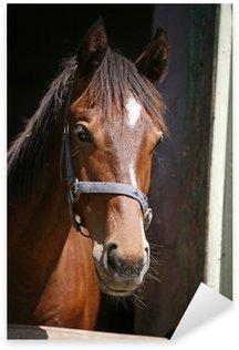 Pixerstick Aufkleber Schöne reinrassige Pferde in seinem Stall beobachten