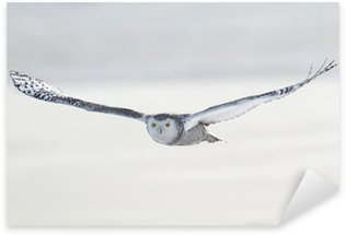 Pixerstick Aufkleber Snowy Owl (Bubo scandiacus)