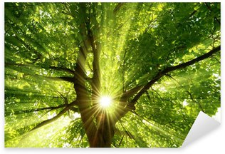 Pixerstick Aufkleber Sonne strahlt explosiv durch den Baum
