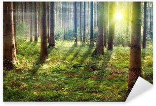Pixerstick Aufkleber Wald Sunset