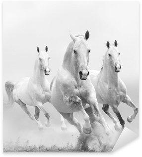 Pixerstick Aufkleber Weiße Pferde im Staub