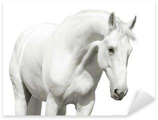 Pixerstick Aufkleber White horse high key