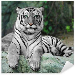Pixerstick Aufkleber WHITE TIGER auf einem Felsen im Zoo