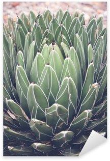Autocolante Pixerstick Close up de agave plantas suculentas, foco seletivo, tonificação