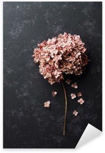 Autocolante Pixerstick Flores secas hydrangea na vista preta tampo da mesa vintage. styling colocar o plano.