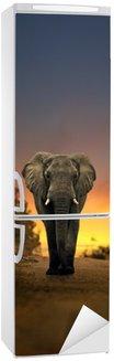 Autocolante para Frigorífico african elephant walking in sunset