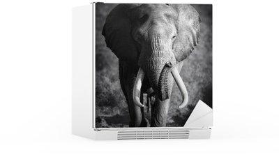 Autocolante para Frigorífico Elephant Bull (Artistic processing)