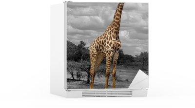 Autocolante para Frigorífico giraffe