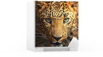 Autocolante para Frigorífico Leopard portrait