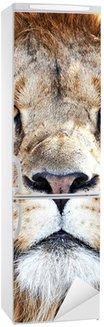 Autocolante para Frigorífico Lion (Panthera leo)