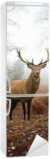 Autocolante para Frigorífico Red deer stag in foggy misty Autumn forest landscape at dawn