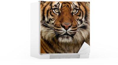 Autocolante para Frigorífico Tiger portrait