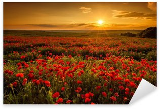 Autocolante Pixerstick Poppy field at sunset