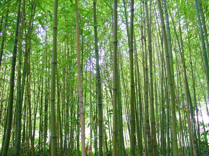 Obraz na PCV Bambus - Tematy