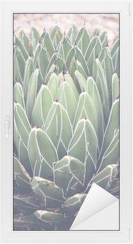 Cam ve Pencere Çıkartması Yakın agave etli bitki, seçici odak, tonlama kadar