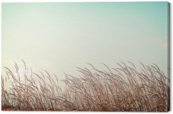 Canvas Abstract vintage natuur achtergrond - zachtheid witte veer gras met retro blauwe hemel ruimte