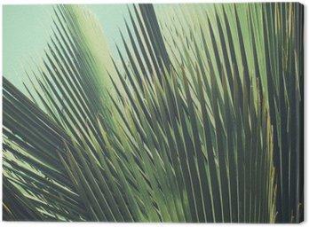 Canvas Abstracte tropische vintage achtergrond. Palmbladeren in zonlicht.