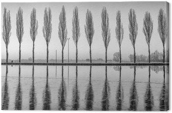 Canvas Alberi Riflessi sul lago all'alba in bianco e nero
