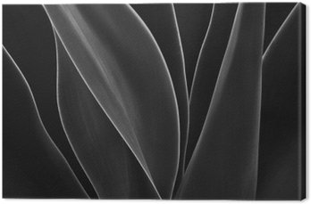 Canvas Dancing Agave