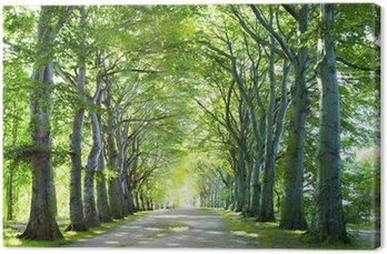 Canvas De weg in het bos