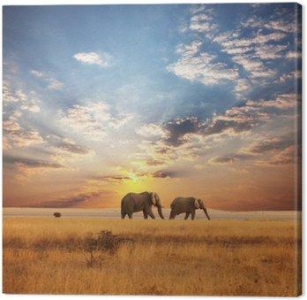 Canvas Elefant