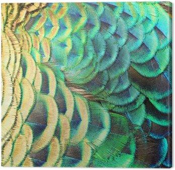 Canvas Groene pauw veren