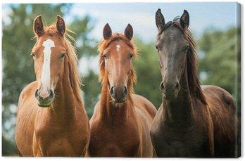 Canvas Groep van drie jonge paarden op de weide