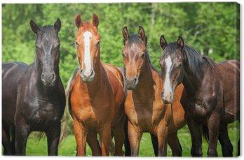 Canvas Groep van jonge paarden op de weide