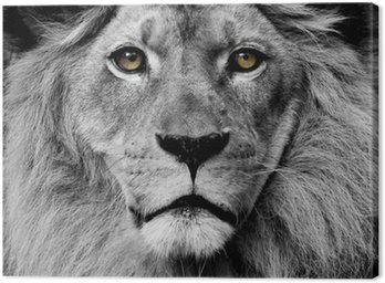 Canvas Leeuw ogen