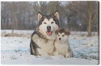 Canvas Malamute et son bebe dans la neige