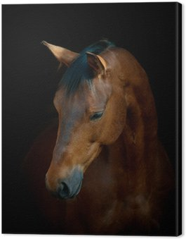 Canvas Paard op zwart