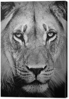 Canvas Portret van de leeuw