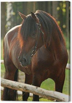 Canvas Prachtige baai paard in bos