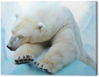 Canvas Print Спящий медведь.
