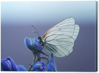 Canvas Print белая бабочка на синем цветке