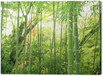 Canvas Print 竹林