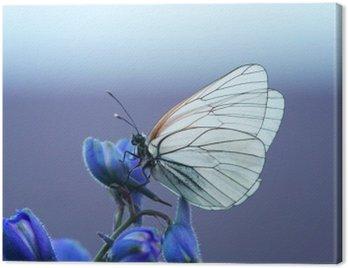 белая бабочка на синем цветке