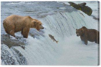 Canvas Print A brown grizzly bear hunting salmon at the river, Alaska, Katmai