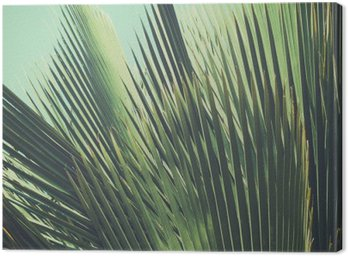 Canvas Print Abstract tropical vintage background. Palm leaves in sunlight.